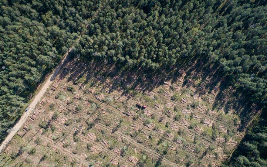 Gamtininkai: plynieji kirtimai saugomose miškų teritorijose neteisėti