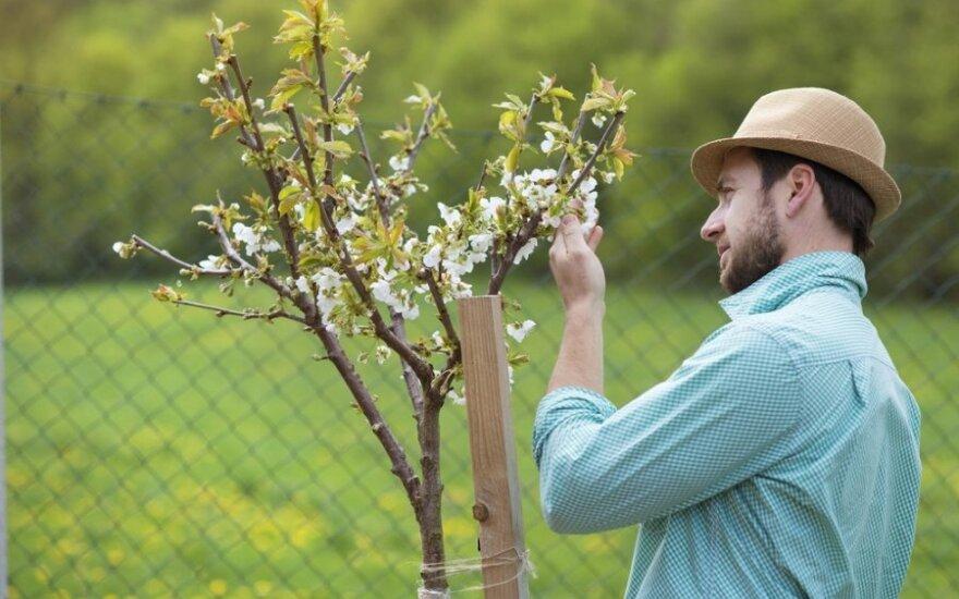 Ką svarbiausia nudirbti sode ir darže gegužę?