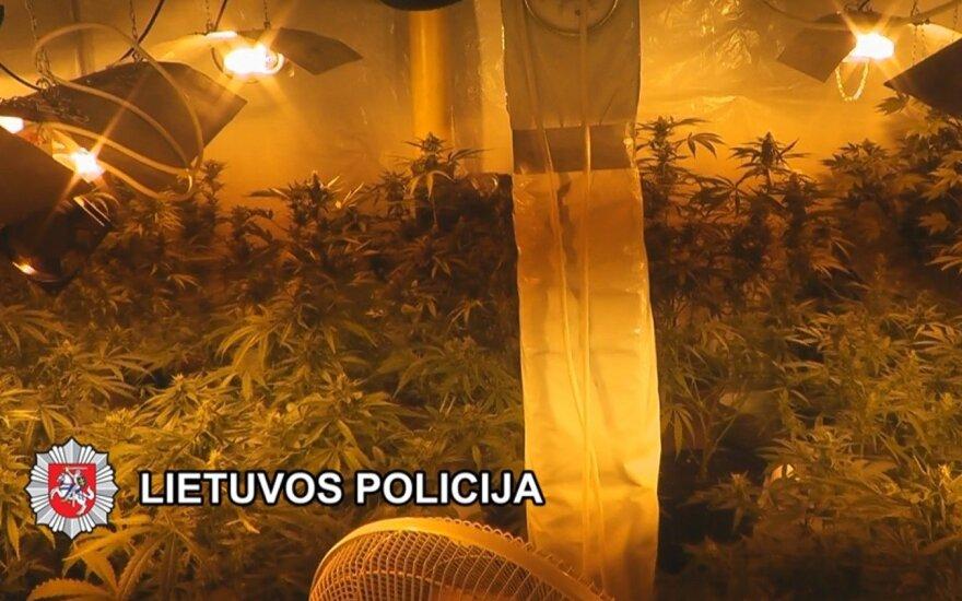 Rasta kanapių auginimo laboratorija, sulaikyti įtariamieji, vienas iš jų – policininkas