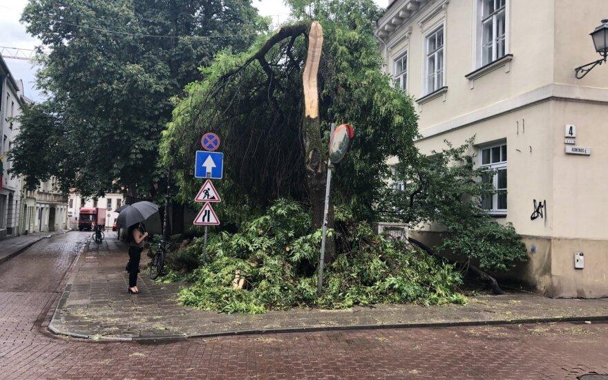 Audros išverstas medis Vilniaus senamiestyje