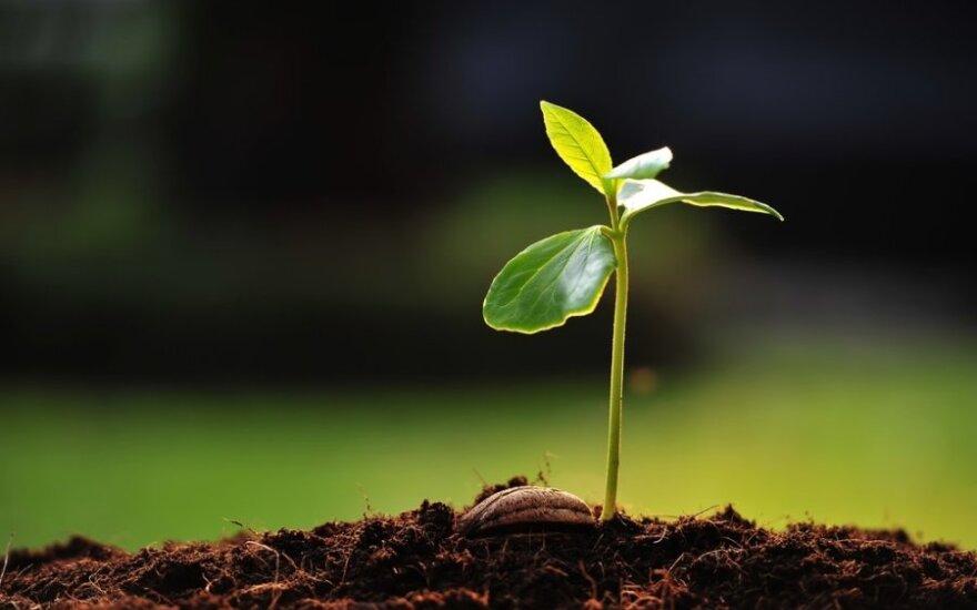 Metas sėti: kaip išvengti GMO ir išsigimusių hibridų?