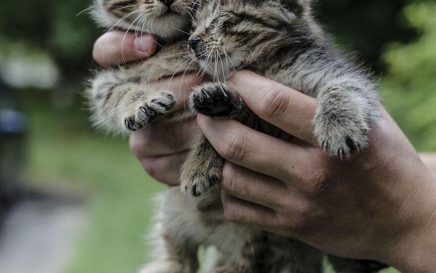 Keisti beglobių gyvūnų padėtį gali tik žmonių neabejingumas