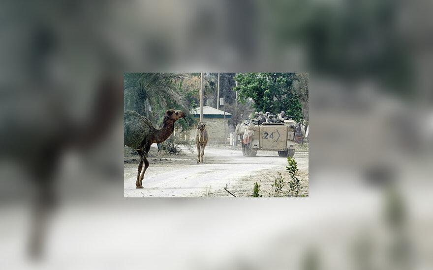 JAV kariškiai Irake važiuoja pro kupranugarius
