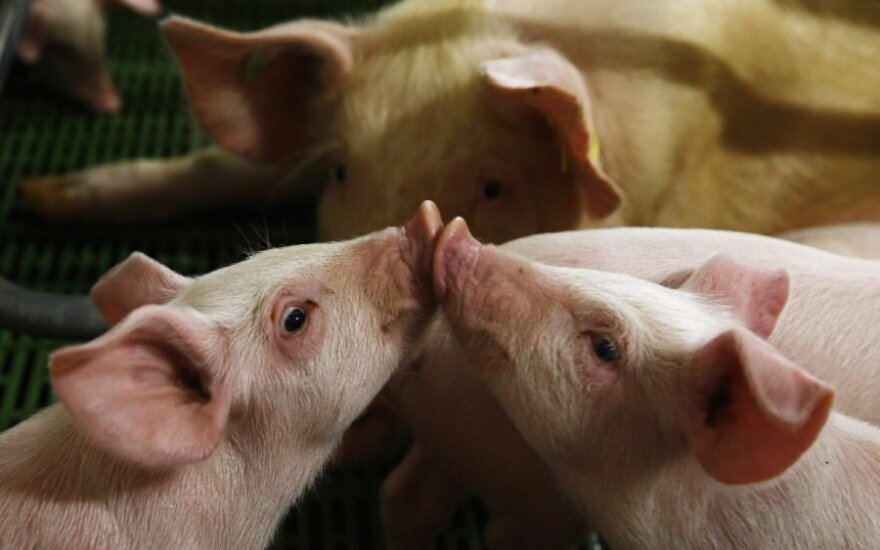 Second outbreak of African swine fever reported in Lithuania