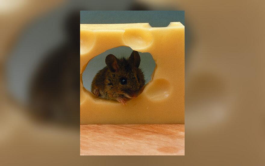 Apetitas, pelė, sūris