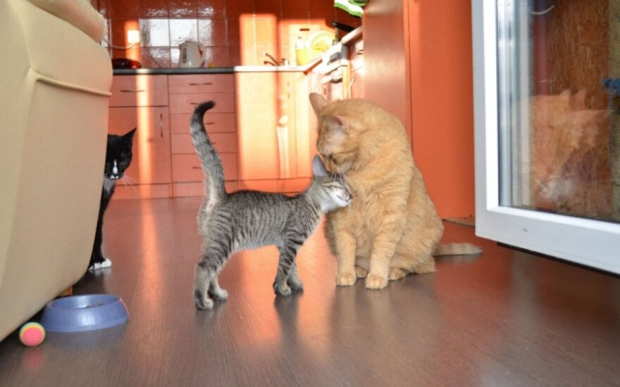 Mažylis, 2,5 mėn. draugiškasis rainiukas Gufis ieško namų!