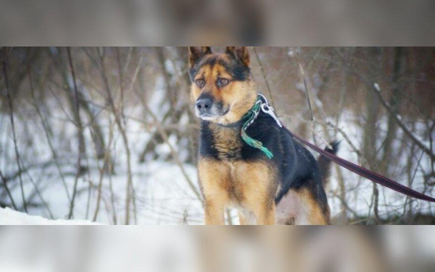 Banglas - šuo, skirtas šeimai
