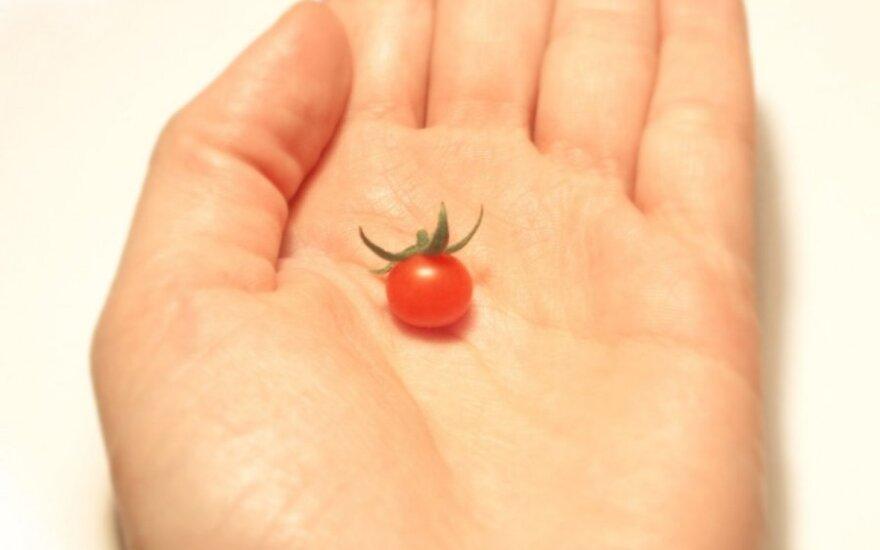 Skaitytojų derliaus rekordai: milžiniški riešutai prieš cento dydžio pomidorą