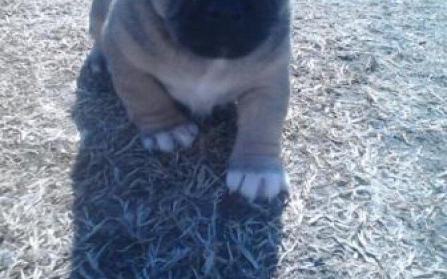 Kukuliukai - tobuli šuniukai: reikalinga parama skiepams ir kalytės sterilizacijai