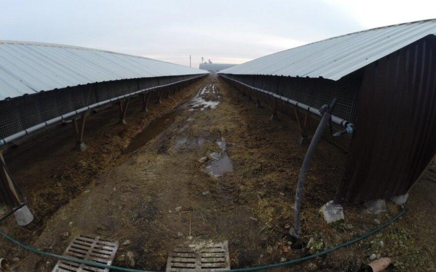 Aplinkosaugininkai nustatė, kad kailinių žvėrelių fermos nesilaiko nustatytų reikalavimų