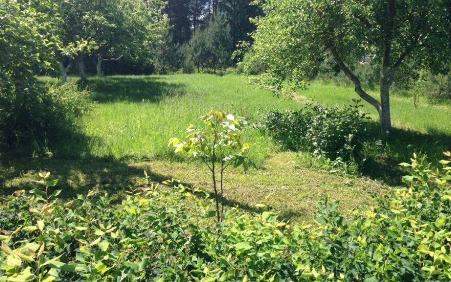 E. Šimkūnaitės palikimas: nėr negydančių žolynų, bet <em>razumno iš durno</em> nepadarys ir jie