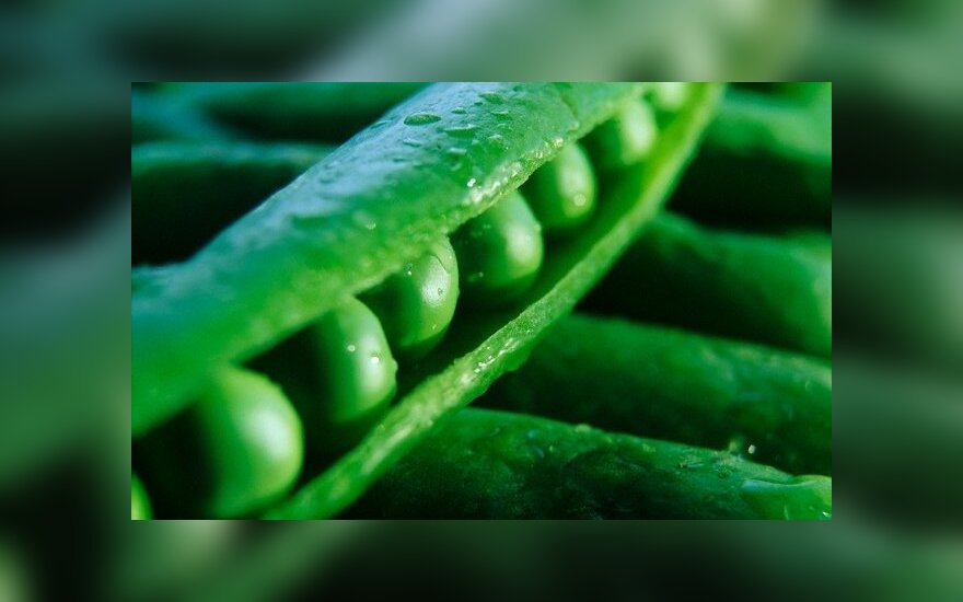 Lithuanian-grown peas go to India