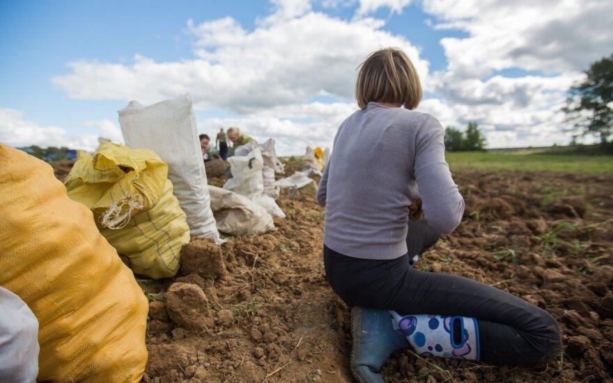 Kaimo tragedija – už 600 eurų norinčių dirbti beveik nėra: į namus tenka priimti alkoholikus ir vagis