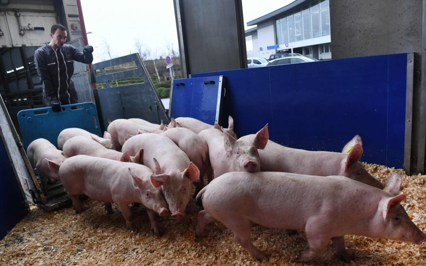 Japonija uždraudė kiaulienos iš Vokietijos importą