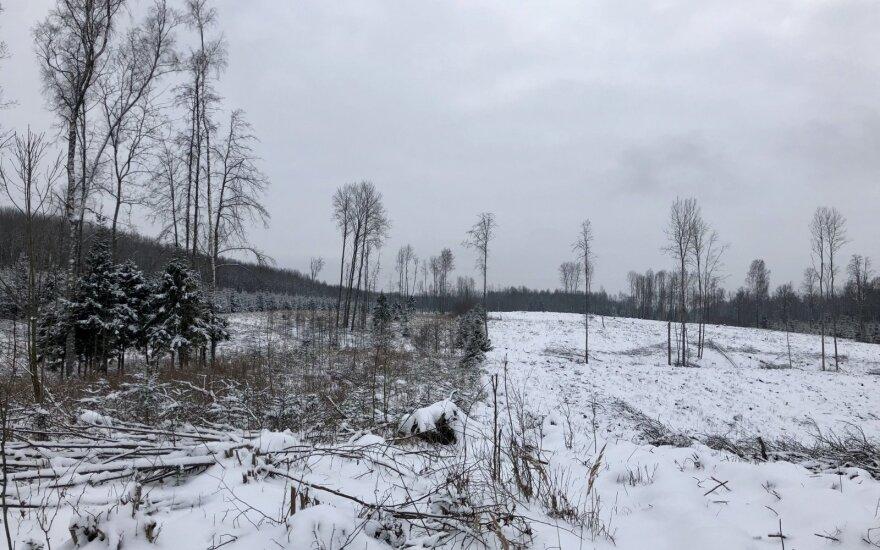 žiema, miškas, pelkė, orai, sniegas, šaltis, kirtimai, miško kirtimas, plynas kirtimas