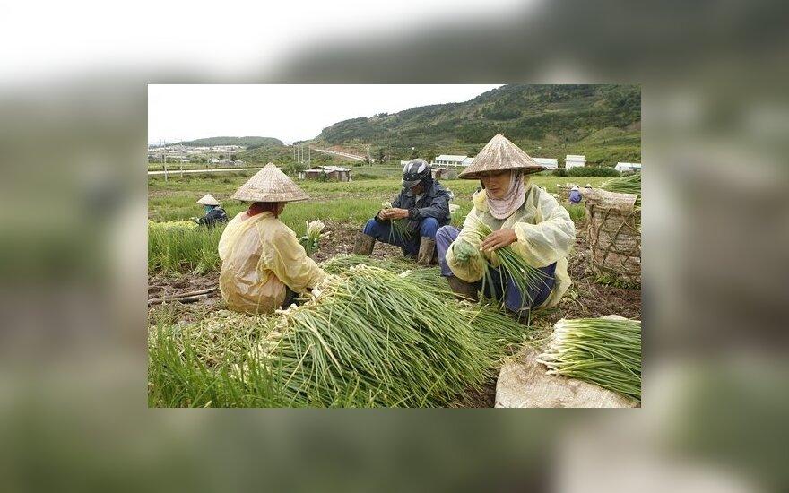 Lietuvos miške sulaikyti nelegalai vietnamiečiai