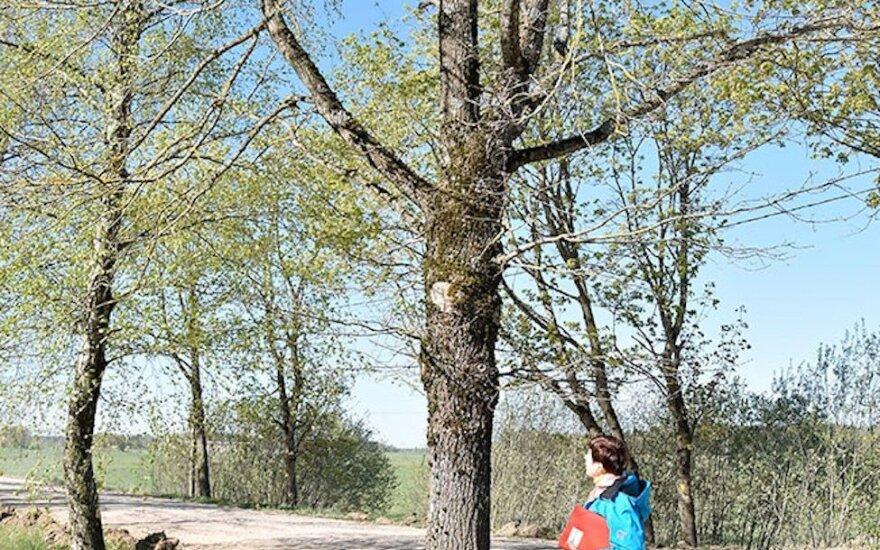 Ilgai lauktas asfaltas apkarto: neteks medžių, su kuriais užaugo kelios kartos