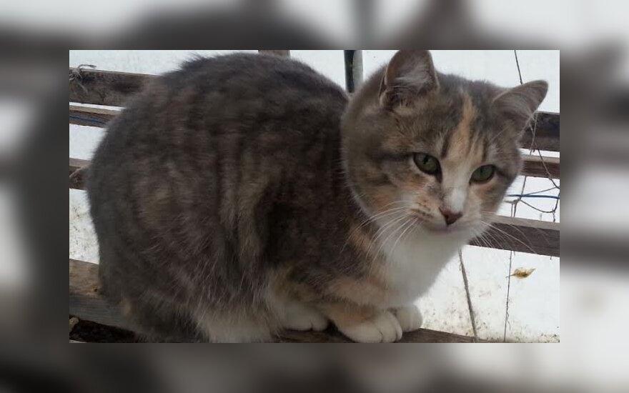 Meli ir žaismingi katinėliai ieško namų