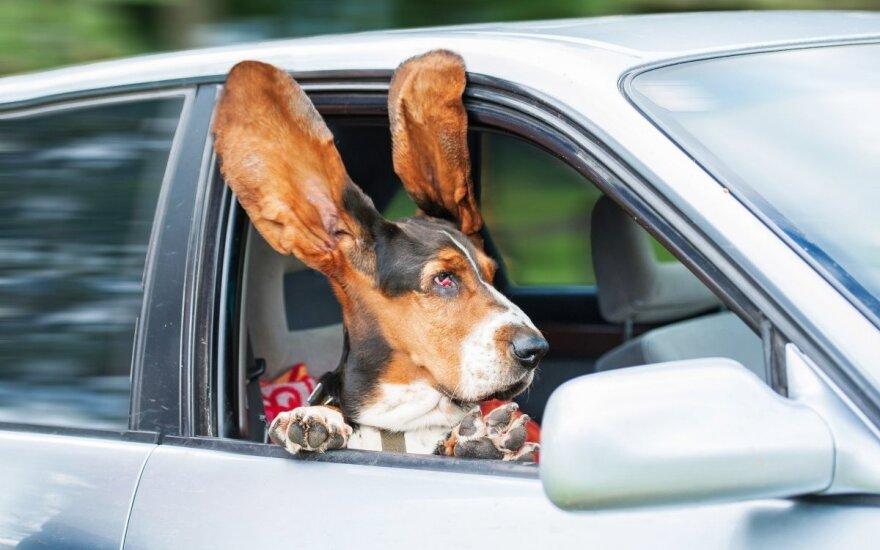 Pavojus, kurį kelia automobilių oro kondicionieriai