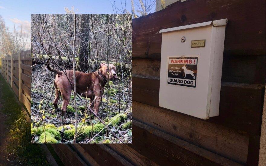 Incidentas Šiaulių rajone vos nesibaigė paauglės mirtimi: kovinis šuo užpuolė ir sukandžiojo 12-metę