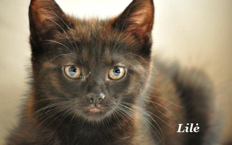 Katinėliams reikia namų arba globos namuose
