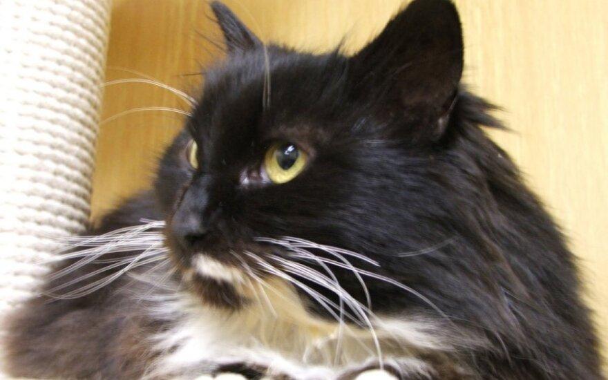 Pati liūdniausia katytė Delma laukia tavo rūpesčio
