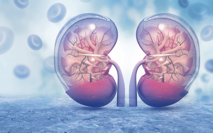 Žolininkės pastebėjimai: kas išduoda mūsų inkstų būklę ir kokios žolelės jiems gali padėti