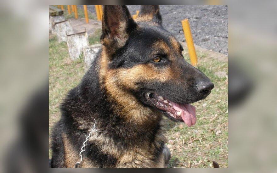 Vagių tragedijos metu pasižymėjo pasieniečių šuo