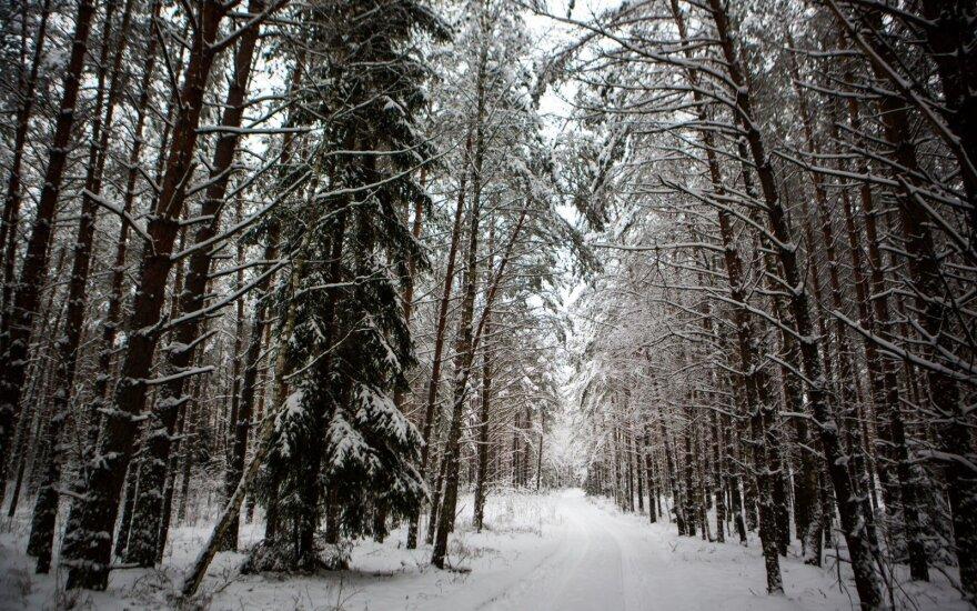 Dingusi senolė rasta po egle: šaltyje praleido visą dieną
