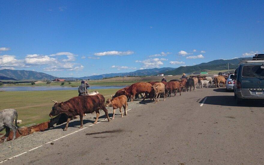 Kelias Mongolijoje nėra skirtas išskirtinai tik automobiliams