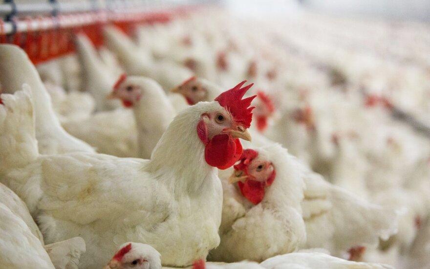 """KG Group"" dvigubins lietuviškos vištienos, užaugintos be antibiotikų, kiekį"