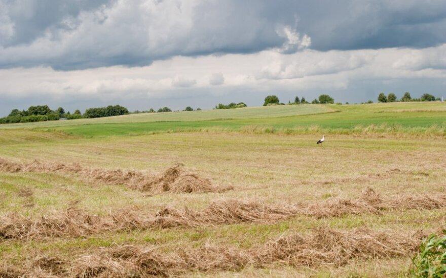 Latvijoje užsieniečiai perka vis daugiau žemės