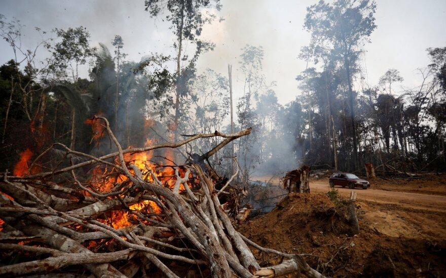Gaisrai Amazonejė
