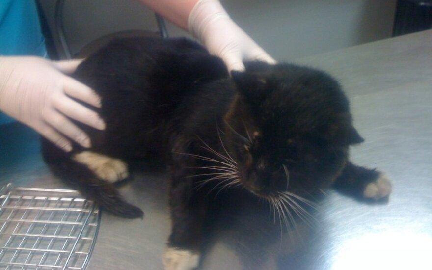Reikalinga parama peršalusio katinėlio gydymui