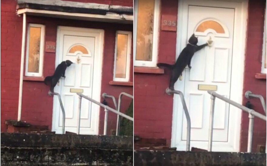 Mandagi katė beldžiasi į duris