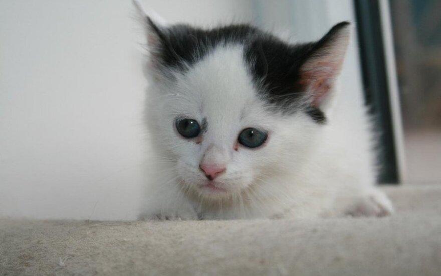Gražuolis katinėlis ieško tikrųjų namų
