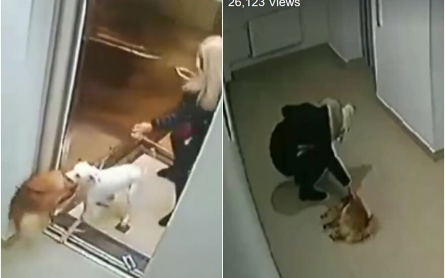 Šunų kova prie lifto