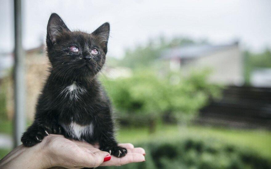 Prašo pagalbos: paremkite atstumtąjį katinėlį Koriuką