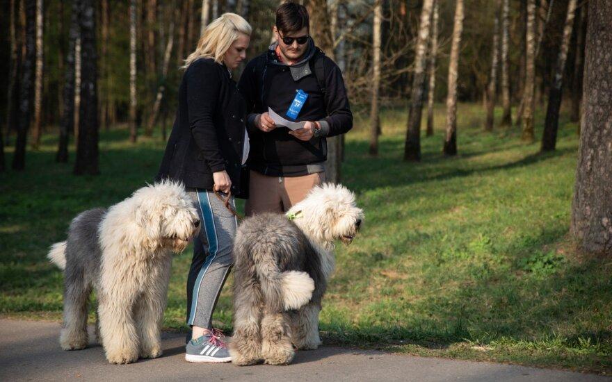 Šunys ir jų šeimininkai užplūdo Vingio parką: vyko 5 km žygis