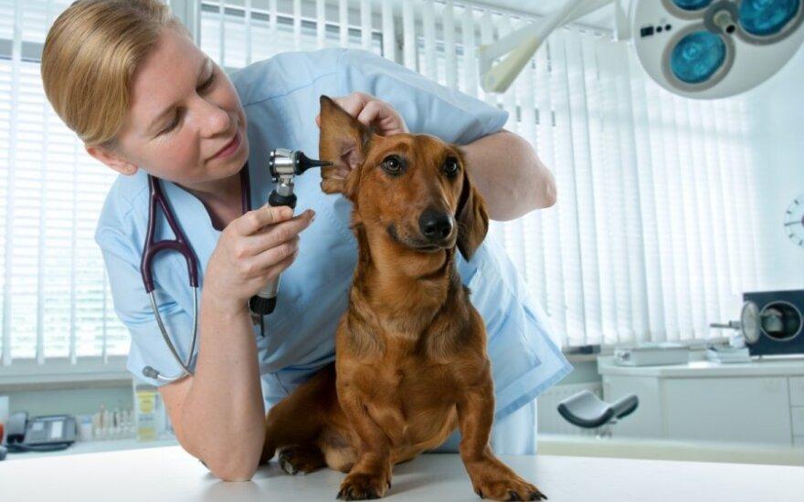 Gyvūnas pas veterinarą