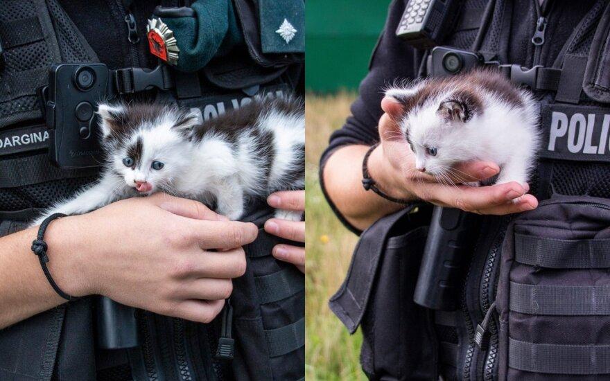 Klaipėdos apskrities policija prašo padėti surasti katinėliui namus