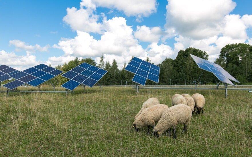 Avys saulės jėgainėje