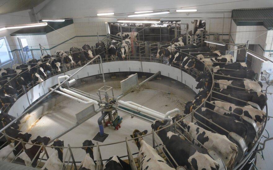 Karvių ferma