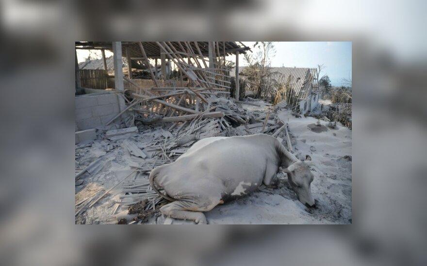 Indonezijos ugnikalnio dujos degino žmones ir gyvulius