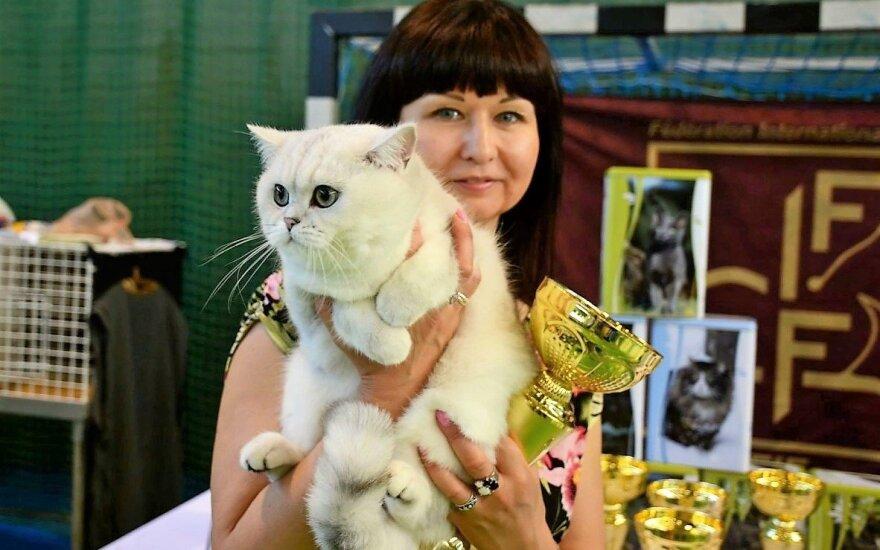 Kačių paroda Vilniuje