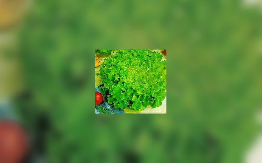 Lapinės salotos