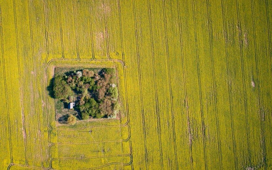 Išmokų didiesiems ūkininkams mažinimo idėja tyliai numarinta: Karbauskis ir grupelė stambiųjų išsaugojo įspūdingas sumas