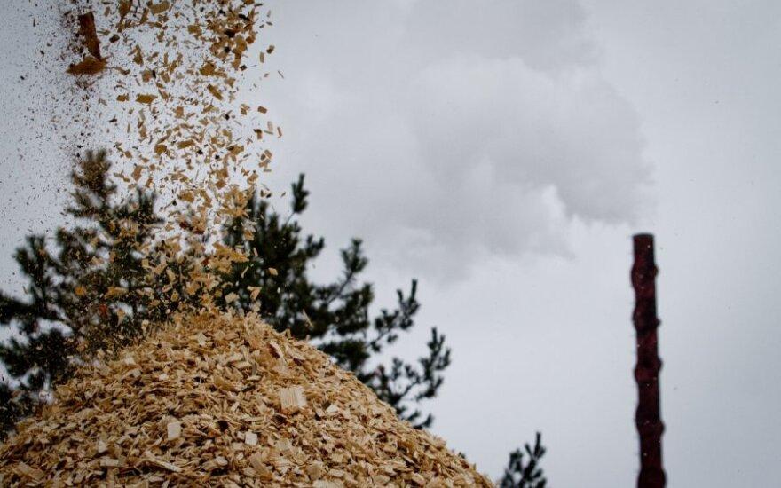 Nuo spalio medžio skiedras bus galima parduoti biržoje