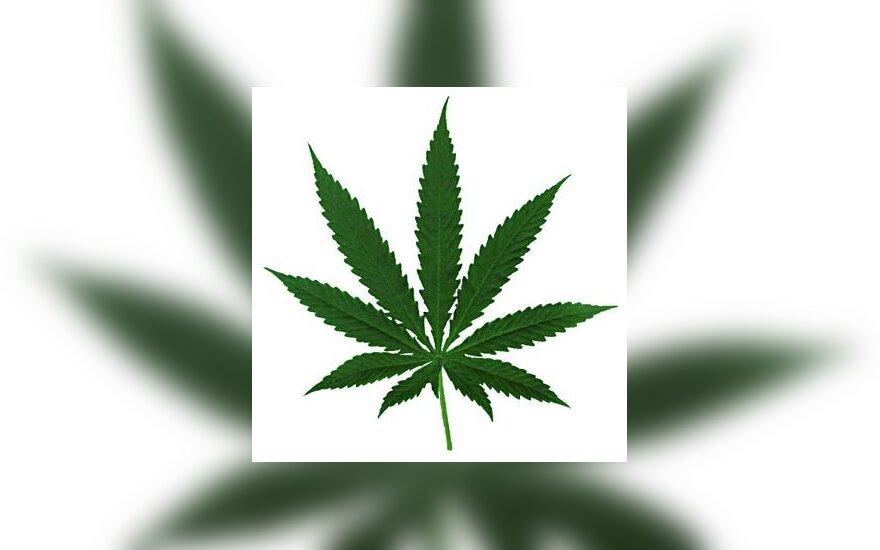 Žolė, marihuana