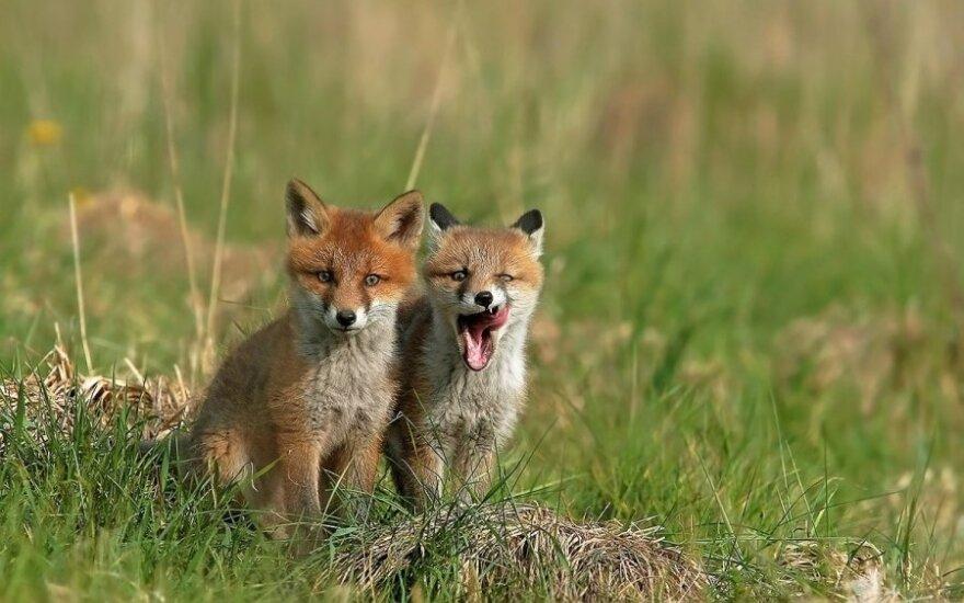 """""""Padainuojam!"""" – maži lapiukai linksmai leidžia dieną"""